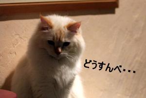 Img_7581_2